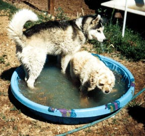 Mookie and Tigger in the pool